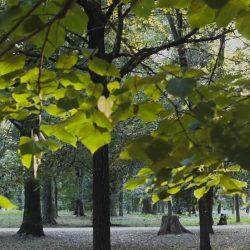 Il Parco delle Cascine